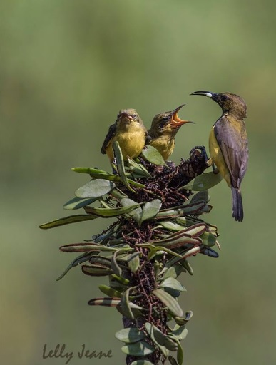 galerry burung 5