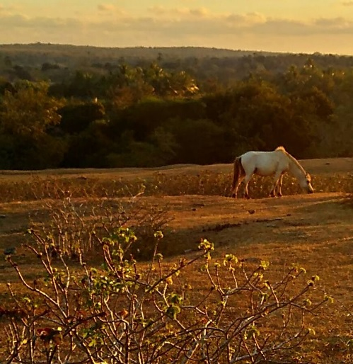Kuda Di Rote1