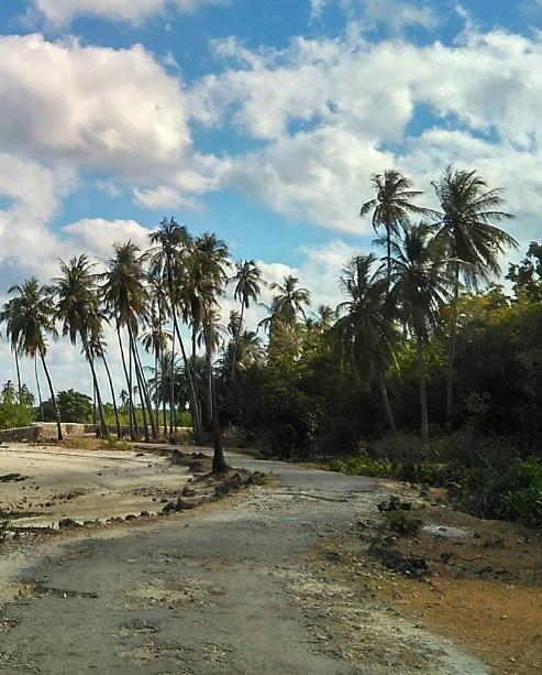 pohon kelapa di Rote