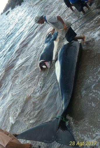 perburuan ikan paus di lamalera2