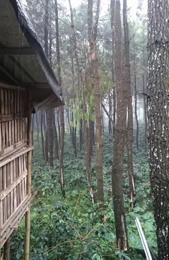hutan precet 2