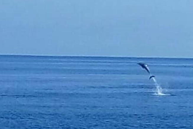 lumba - lumba di wini 7