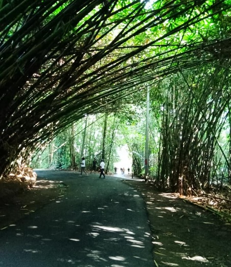 Hutan Bamboo Buungan Bangli 10