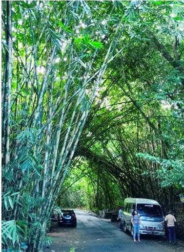 Hutan Bamboo Buungan Bangli 11
