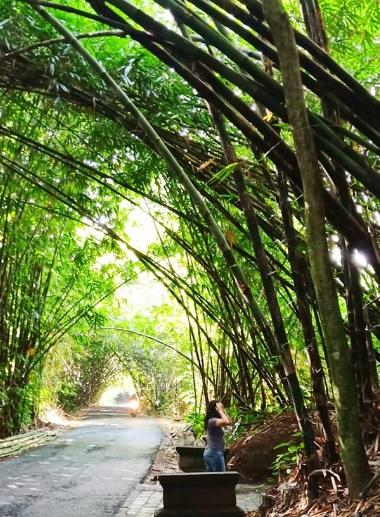 Hutan Bamboo Buungan Bangli 12