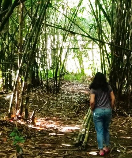 Hutan Bamboo Buungan Bangli 7