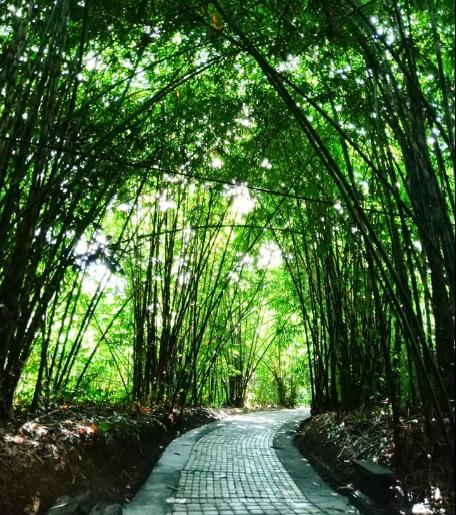 Hutan Bamboo Buungan Bangli 9