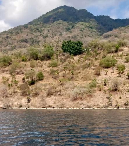 Pulau Pura 5